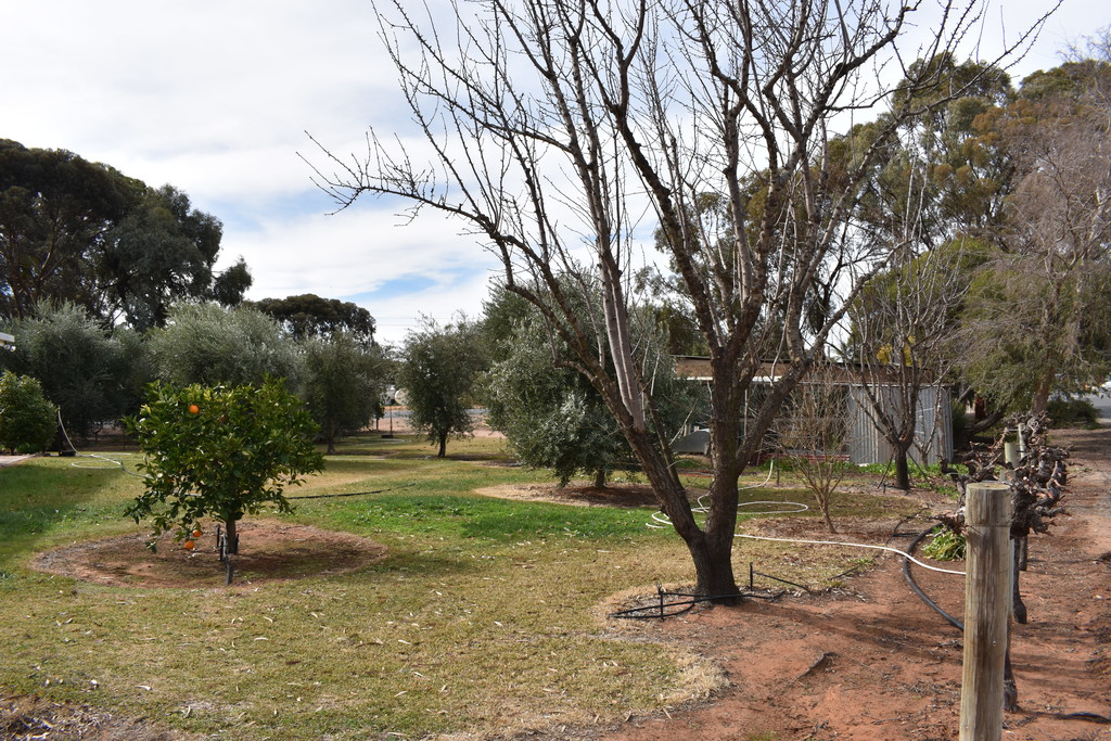 379 Ral Ral Avenue RENMARK SA 5341 Andrews Property